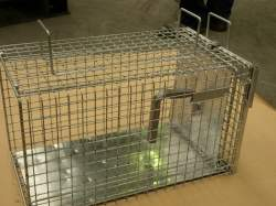 Life Cage for Cats & Possums - Other Pests - D2K | Alpeco