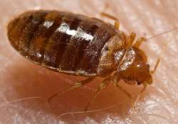 no chemicals, toxic or fumes involved Bed Bug Treatment