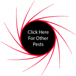 Click Here For Other Pests