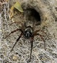 Professional Pest Management Spiders | Alpeco
