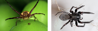 Pest Control Treatments Spiders | Alpeco