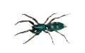 Spiders Pest Control | Alpeco
