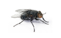 Flying Insects Pest Elimination | Alpeco