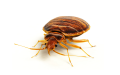 Environmental Bed Bug Removal