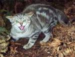 Pest Control Feral Cats | Alpeco